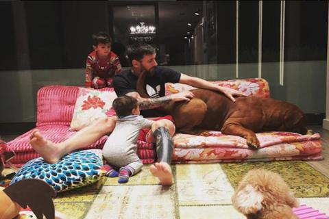 """""""Hulk"""", el perro gigante de Messi que causa furor en redes sociales"""