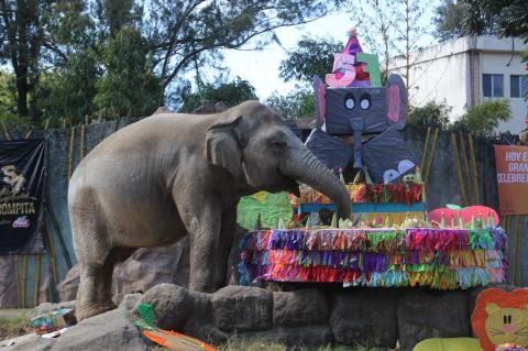 El cumpleaños 57 de Trompita en el Zoológico la Aurora