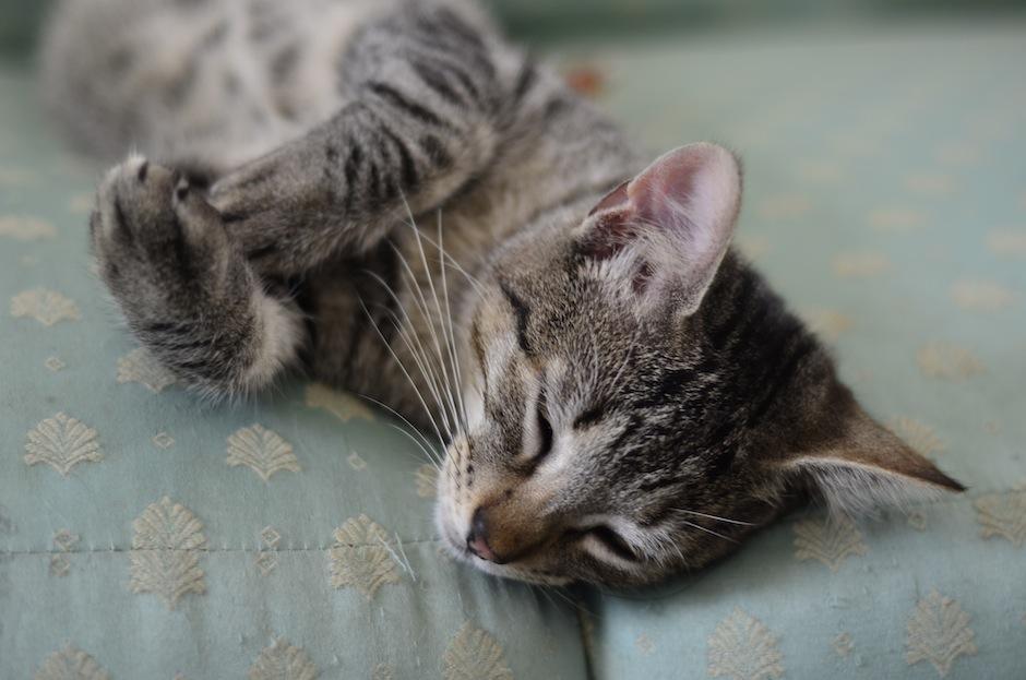 """Las cinco maneras de celebrar el """"Día del Gato"""" todos los días"""