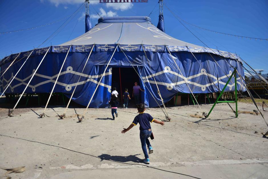 Los circos buscan reinventarse para no morir