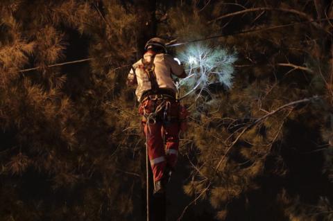 Cruz Roja intenta rescatar a gato de un árbol en el Anillo Periférico