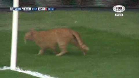 ¡Insólito! Un gato detuvo el partido Besiktas vs. Bayern Munich