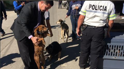 Así fue el rescate de los perros maltratados en Xela