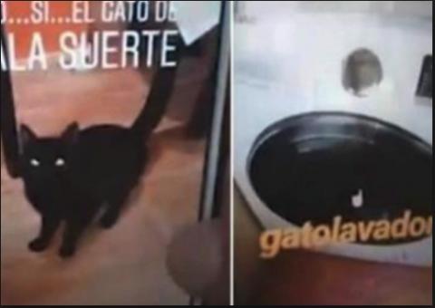Detienen a una joven que centrifugó a un gato en la lavadora