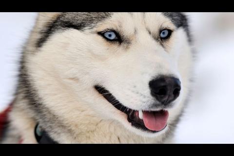 Si estás pensando adoptar aquí te dejamos la guía de razas de perro