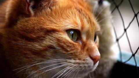 """Video: gato """"educado"""" toca la puerta de su casa para poder entrar"""