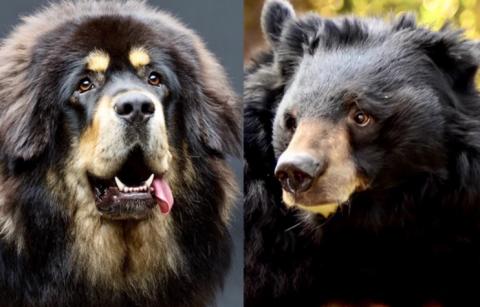 Familia crio por dos años a un oso pensando que era un perrito