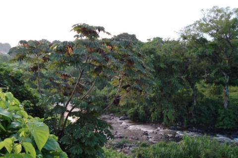 Intensa búsqueda de un niño que fue arrastrado por un río en Escuintla