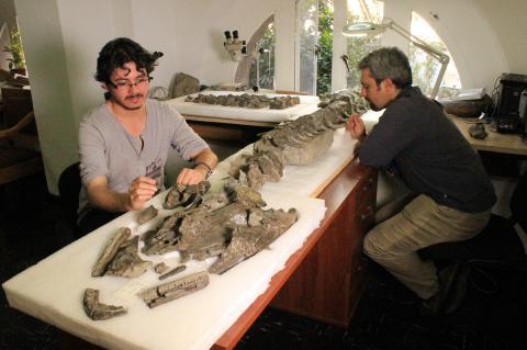 Investigadores chilenos descubren un nuevo tipo de plesiosaurio
