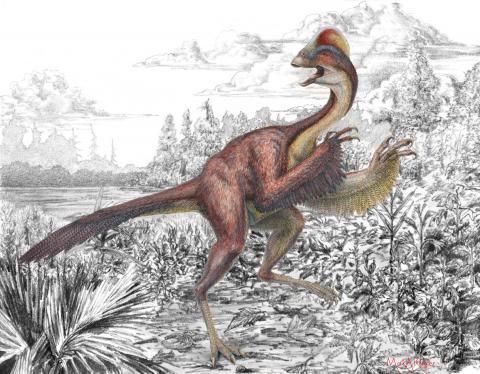 Científicos descubren restos de dinosaurio de hace 66 millones de años