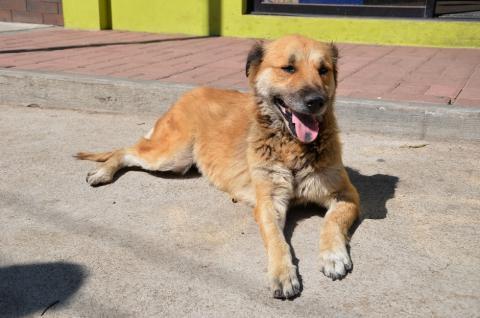 Conoce este particular albergue canino, en pleno corazón de la zona 21