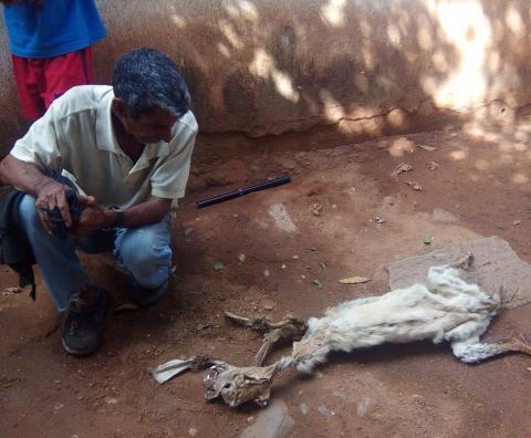 Visitan cadáver de animal extraño en busca de adivinar qué es