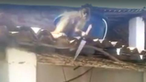 Mono armado causa pánico en un bar