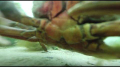 Esto fue lo que grabó una cámara que estuvo un año bajo el agua