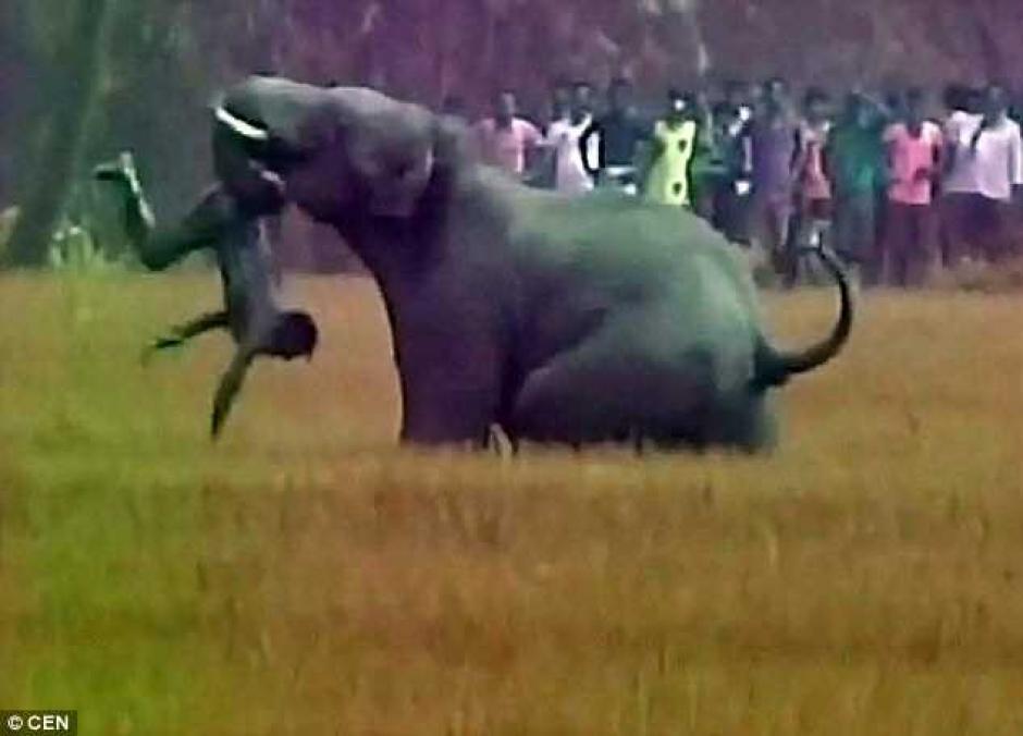 Elefante ataca a pueblo en la India y mata a un hombre