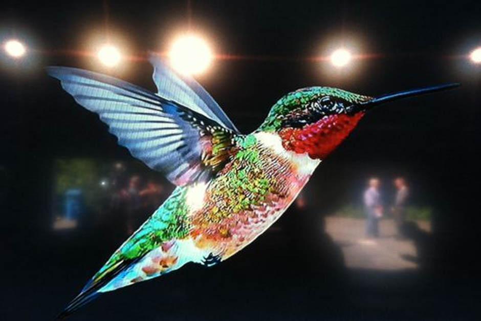 """El """"colibrí"""" de Google"""