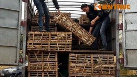 Rescatan a gatos que serían consumidos en Vietnam
