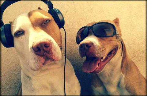Los perros tienen un gusto musical secreto: el reggae los entretiene