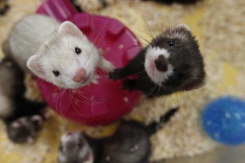 Hoy se celebra el Día Internacional de los Animales