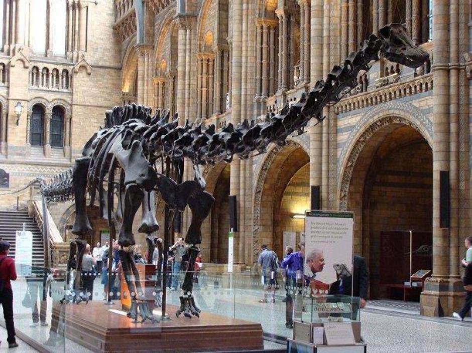 Esqueleto de dinosaurio será subastado en el Reino Unido