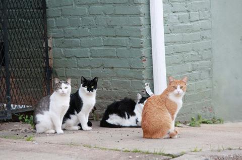 Ministro israelí propone desterrar a los gatos para no castrarlos