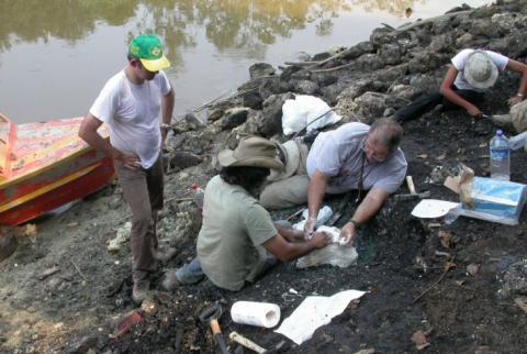 Hallan fósiles de cocodrilos de hace 13 millones de años en Perú