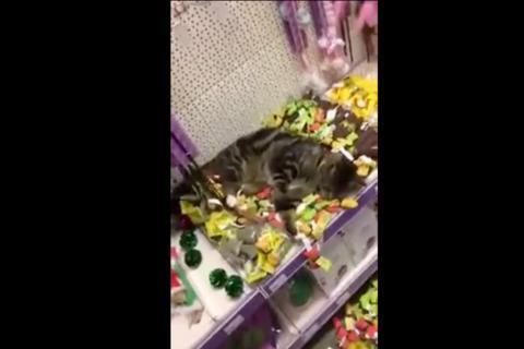 Un gato pasa de perdido, a ser el más feliz del mundo