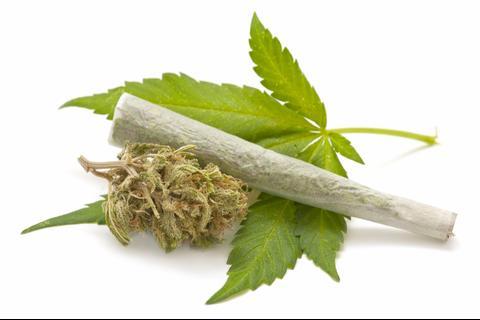 Diputado no se rinde e intenta de nuevo la legalización de marihuana