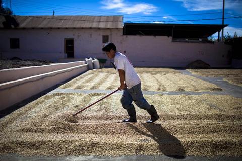 El Congreso de Guatemala amplía un fideicomiso por diez años para los caficultores