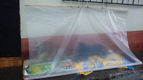 Improvisan techo para proteger de la lluvia a los perros callejeros