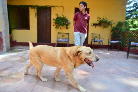 ¿Qué raza de perro elegir para nuestra familia?