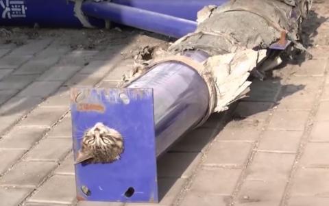 Bomberos rescatan a un gato que quedó atrapado en un tubo de metal