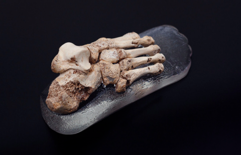 """El pie """"Vicente del Bosque"""", la nueva joya antropológica de Atapuerca"""
