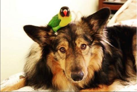 La amistad entre un perro y un pájaro, conquista las redes sociales