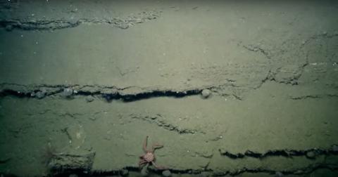 Encuentran misteriosa burbuja de color púrpura en el fondo del océano