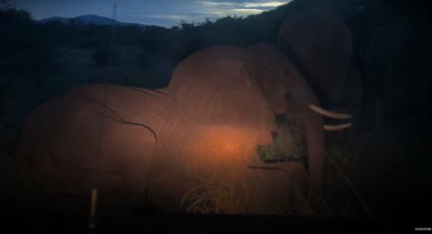 Bebé elefante se niega a abandonar el cadáver de su madre