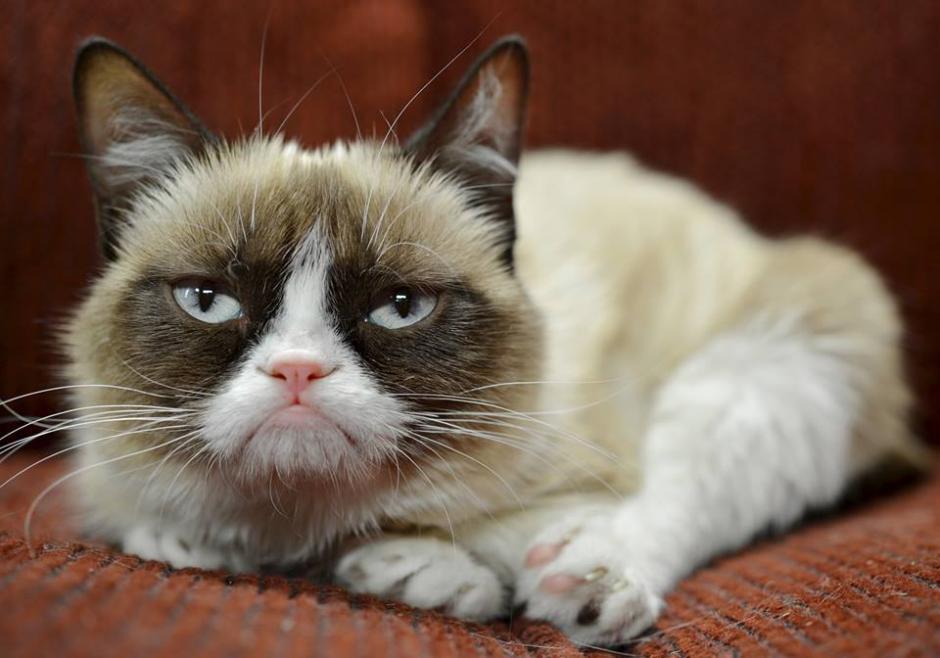 "Tardar, la verdadera ""grumpy cat"""