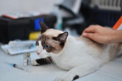 Vacunación y desparasitación: pieza angular en la salud de tu mascota