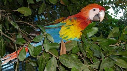 Diprona rescata aves en el peligro de extinción