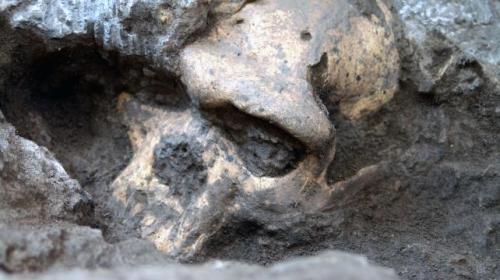 Cráneo encontrado en Dmanisi aporta nuevas claves sobre la aparición del ser humano