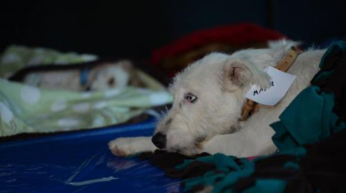 Entran en vigencia multas de hasta Q34 mil por maltrato animal