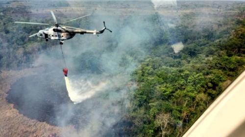 Guacamayas, tapires, monos y otros han muerto por incendios en Petén