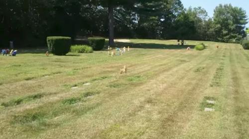 ¿El fantasma de un perro estaba sobre su tumba? Esta es la historia