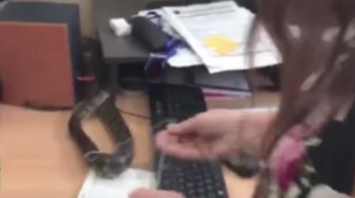 La espeluznante e inesperada visita de una serpiente a un canal de TV