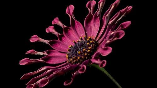 Así era la primera flor que apareció sobre la faz de la Tierra