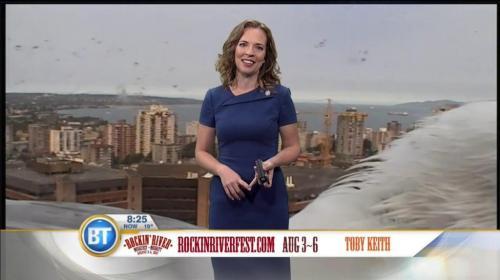 """Una gaviota gigante se roba el show durante una transmisión """"en vivo"""""""