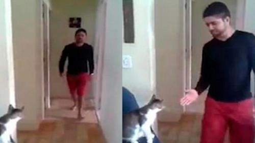 """Este es el saludo """"cool"""" entre un joven y su gato"""