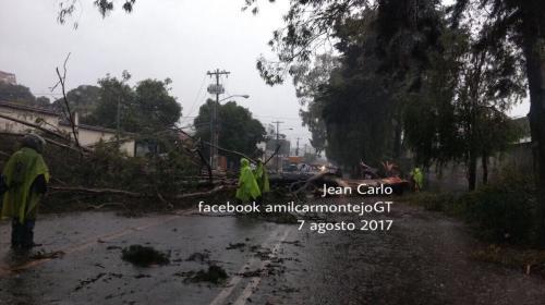 Fuertes lluvias desploman cuatro árboles y complican el tránsito