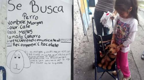 Con este ingenioso cartel una niña mexicana recuperó a su perro
