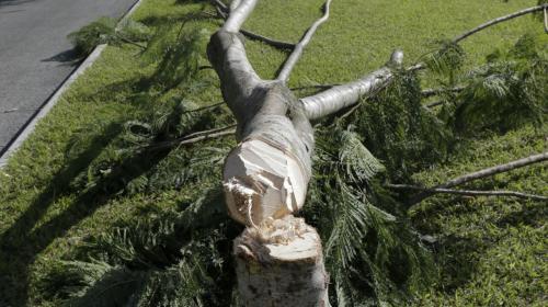 Las dos hipótesis sobre la tala de árboles cerca del aeropuerto